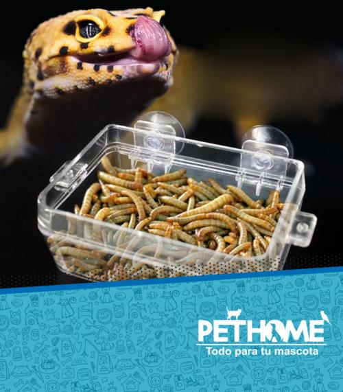 Alimentos para reptiles