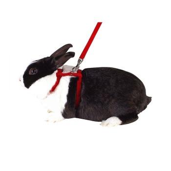 Arnes Para Conejos Incluye Trailla Colores