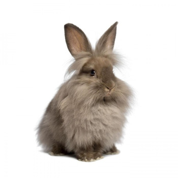 Conejos (Raza Común, Enanos, Cabezas de leon,Orejas Caidas)