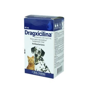 Dragxicilina Antibacteriano