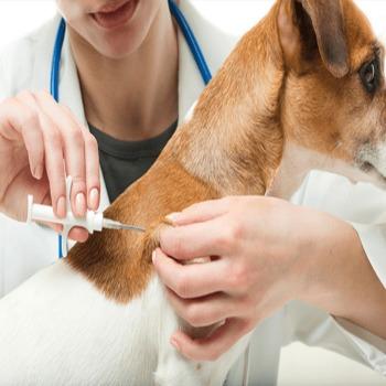 Chip Para Mascotas Animal ID